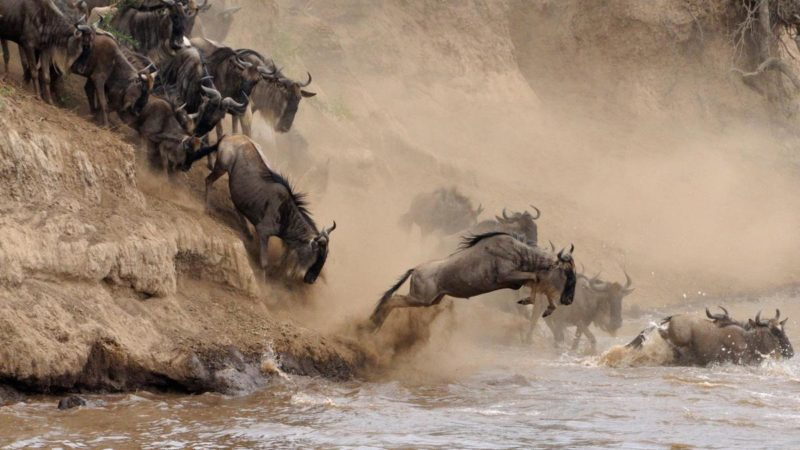 12-Day Kenya and Tanzania Budget Holiday Amazing Safari