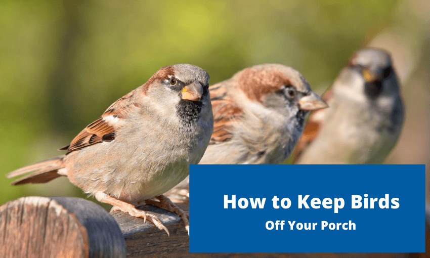 how to keep birds off your porch wild