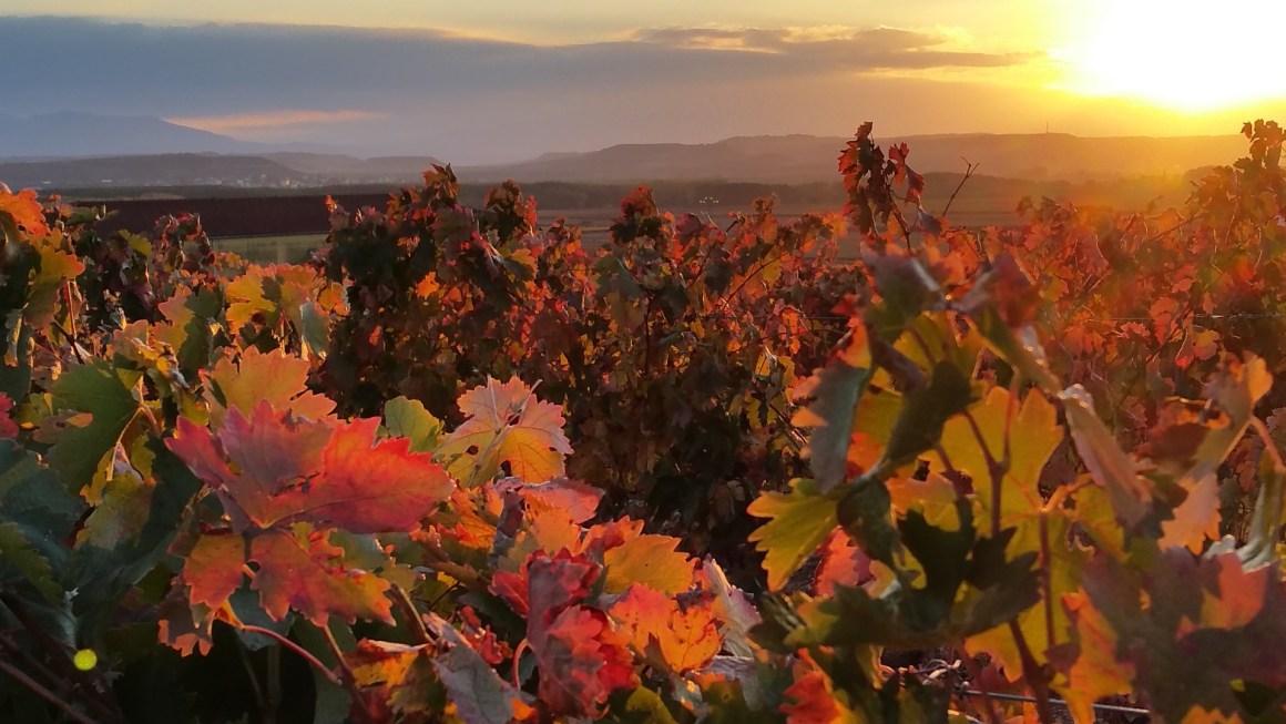 6 Reasons To Walk The Camino De Santiago In Autumn