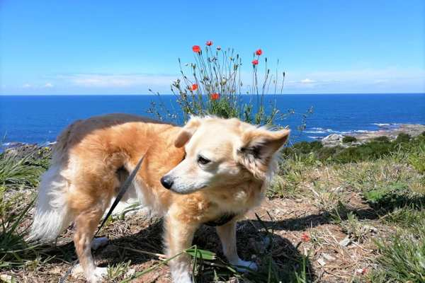 A Woof Woof Camino. Walking The Variante Espiritual Way With My Furry Peregrino.