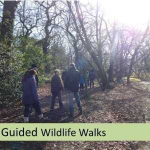 Guided Wildlife Walk London