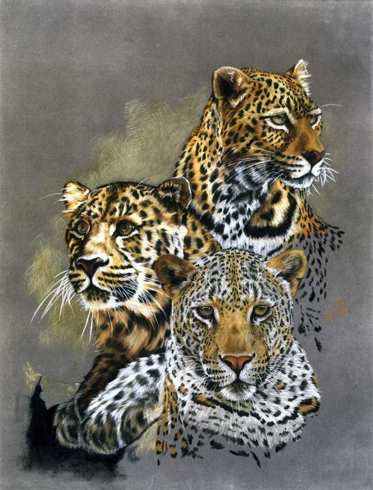 leopard panthera pardus classification