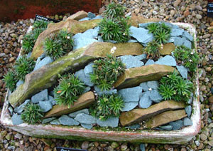 Succulent Rock Garden Ideas Photograph Bits Of Stone Can B