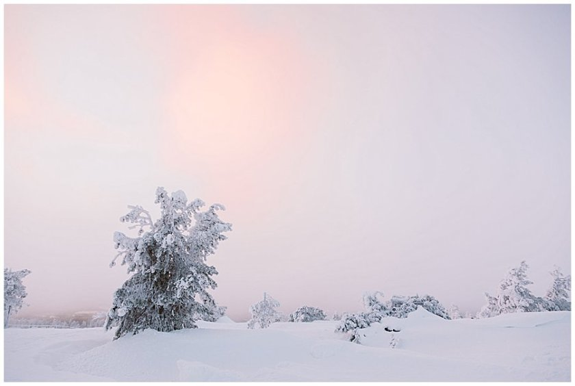 The sun creates a pink glow over the white, snow covered landscape in Levi Finland by Wild Connections Photography