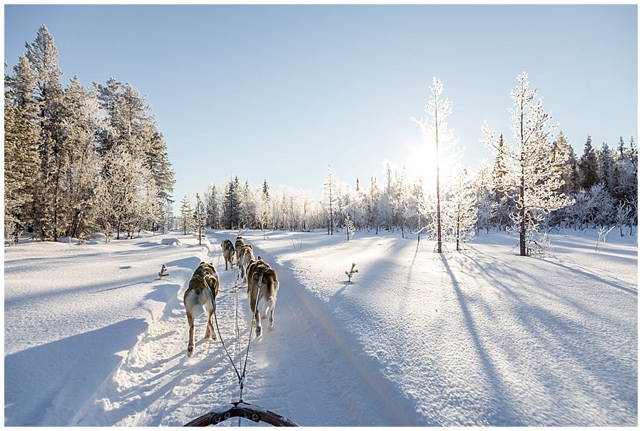 Wingrens Dog Safari Lapland husky dogs pull the sled along a forest trail in Levi Finland by Wild Connections Photography