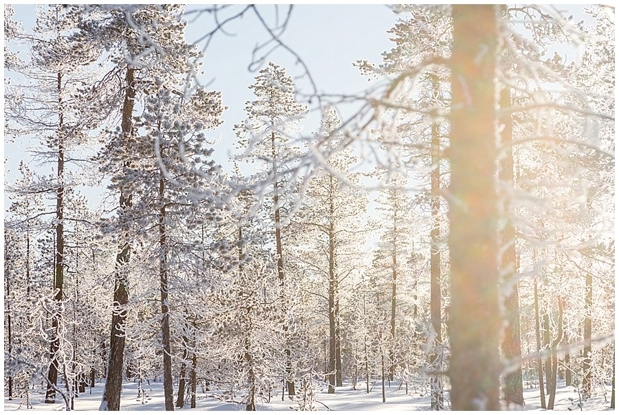 A picture of the sun shining through the frozen trees in Levi Finland by Wild Connections Photography