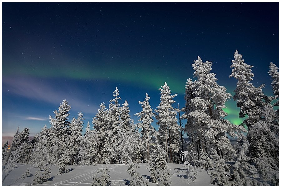 The northern lights dance above the tall trees in Levi Finland by Wild Connections Photography