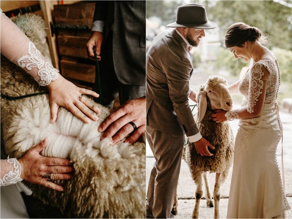 Bride and groom inspect a sheep. Photos by Wild Connections Photography