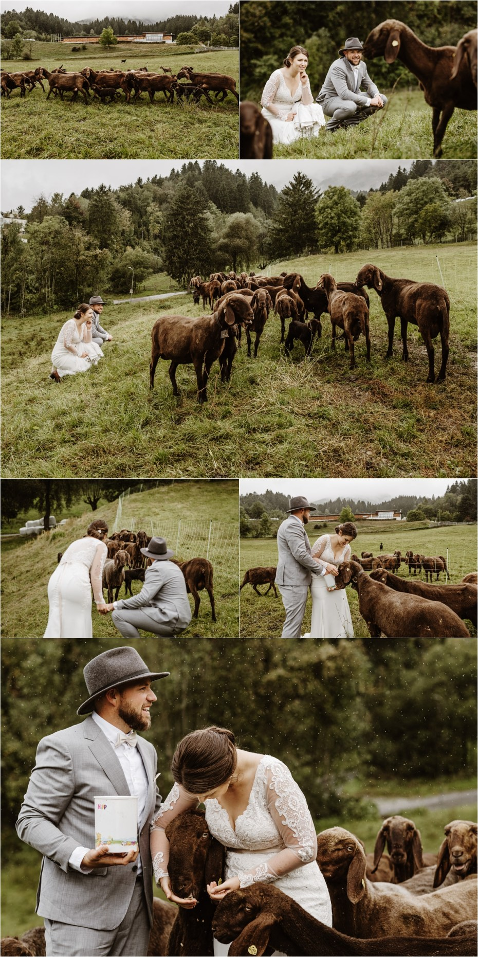 Bride and groom in a field of sheep after their Innsbruck elopement ceremony. Photos by Wild Connections Photography