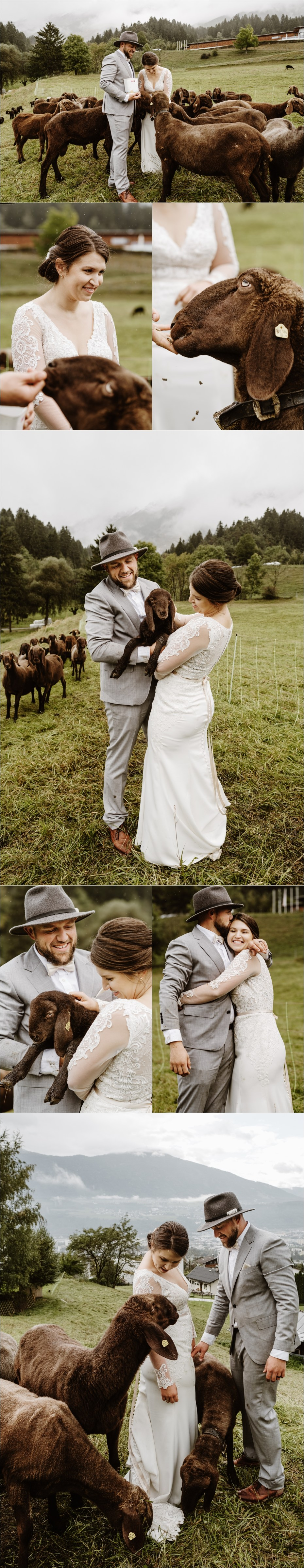 Bride and groom visit a sheep farm on their wedding day in Austria. Photos by Wild Connections Photography