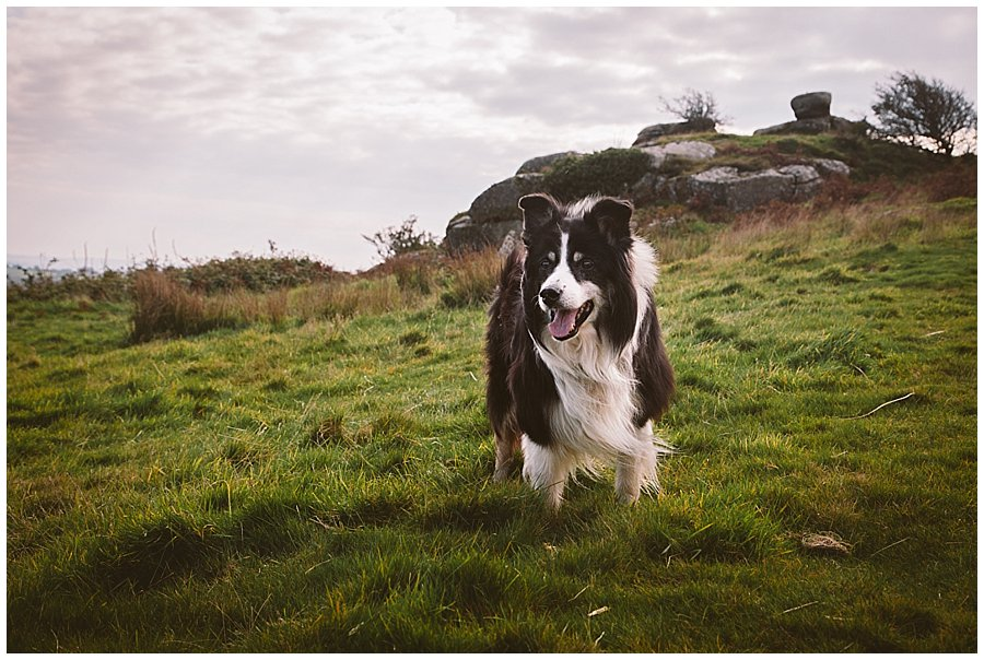 Wedding with Rescue Dogs - Border collie walking across the moors by Wild Connections Photography
