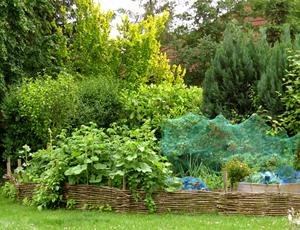 Wilder Garten Anlegen  Wohndesign