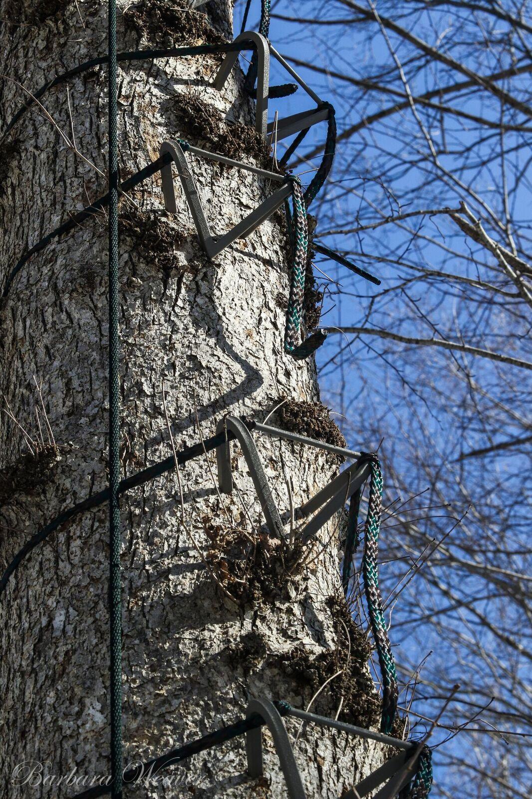 Tree Stand Accessories  Tree Climbing Tool  Wild Edge Inc