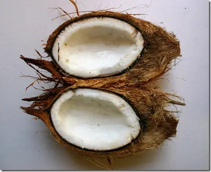 A split Coconut fruit