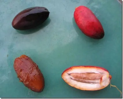 Dates - clockwise from top right: crunchy, crunchy opened, soft out of skin, soft