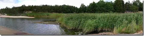 Spreading habitat of the reed (a reed bed)