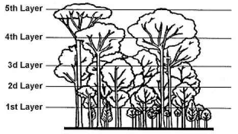 The five layers of vegetation in the jungle