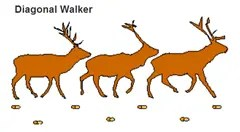 Animal tracking - Diagonal Walker pattern