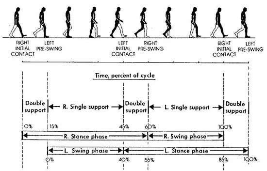Illustration showing the phases in a human's gait