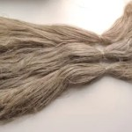 Bundle of flax fibers