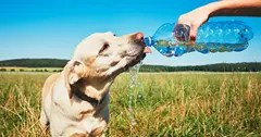 Dog drinking water from a bottle