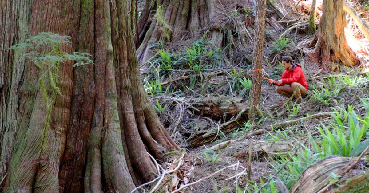 39 since at least 1846. Protecting Old Growth Wilderness Committee