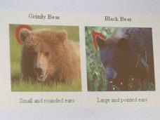 bear-dif-4