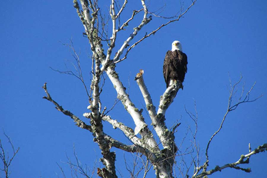 bird-watching-photo1