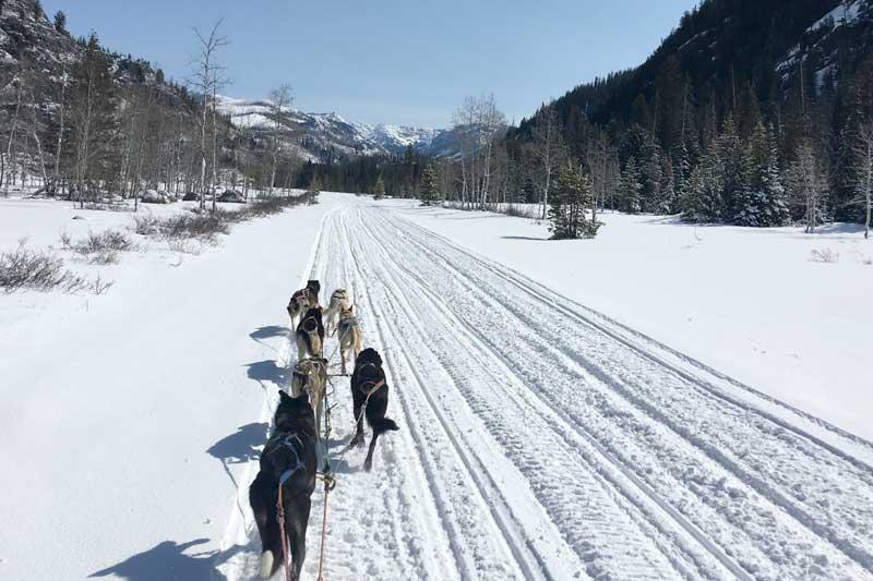 sled-dog-ride-1