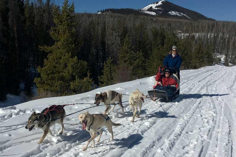 sled-dog-ride-2