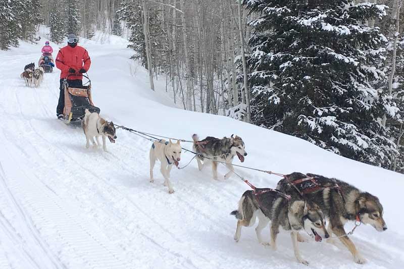 sled-dog-ride-4