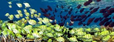 WT—Komodo Snorkeling Expedition—Wilderness Travel