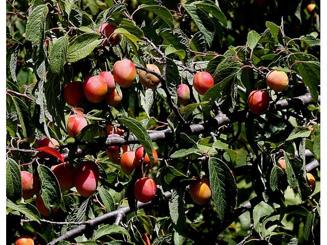 Oklahoma Plants Native Identification