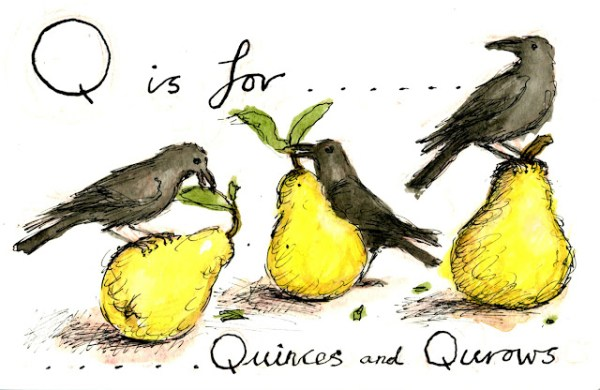 Q is for Quinces and Qurows. Illustration by Greg Becker