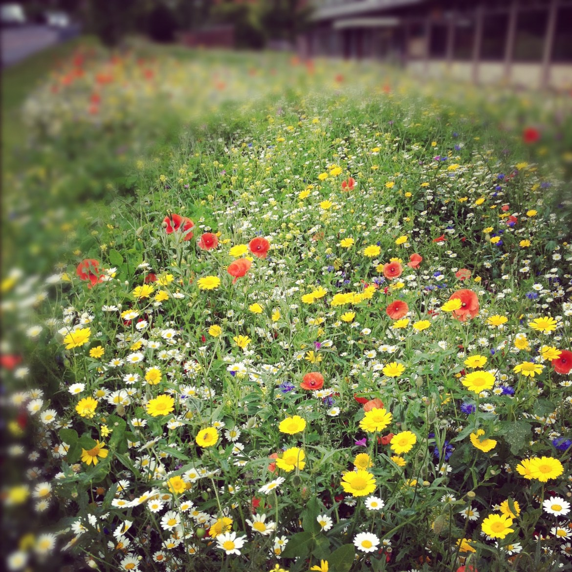 flower meadow, high wycombe