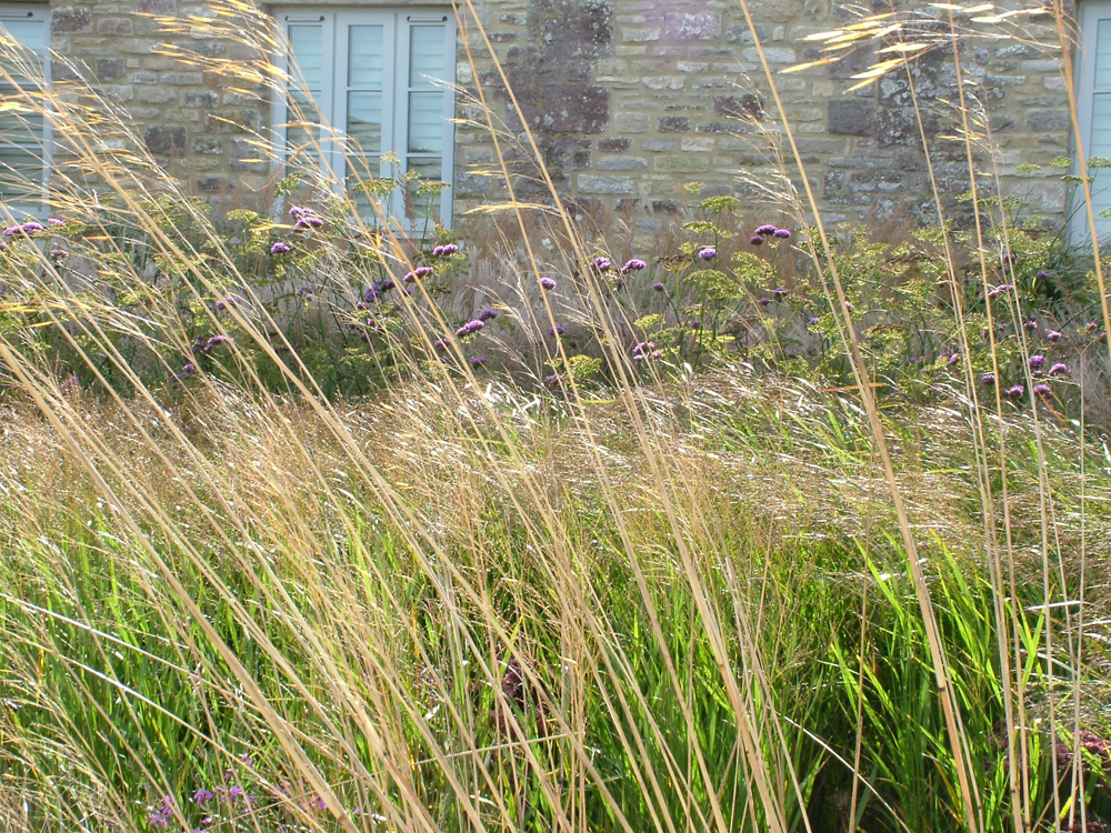 A farmhouse garden wildflowerhour for Grasses planting scheme