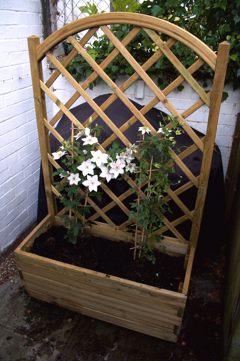 clematis in mobile planter