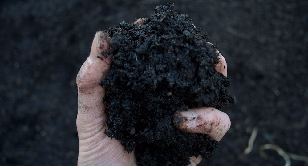 field compost vegetable