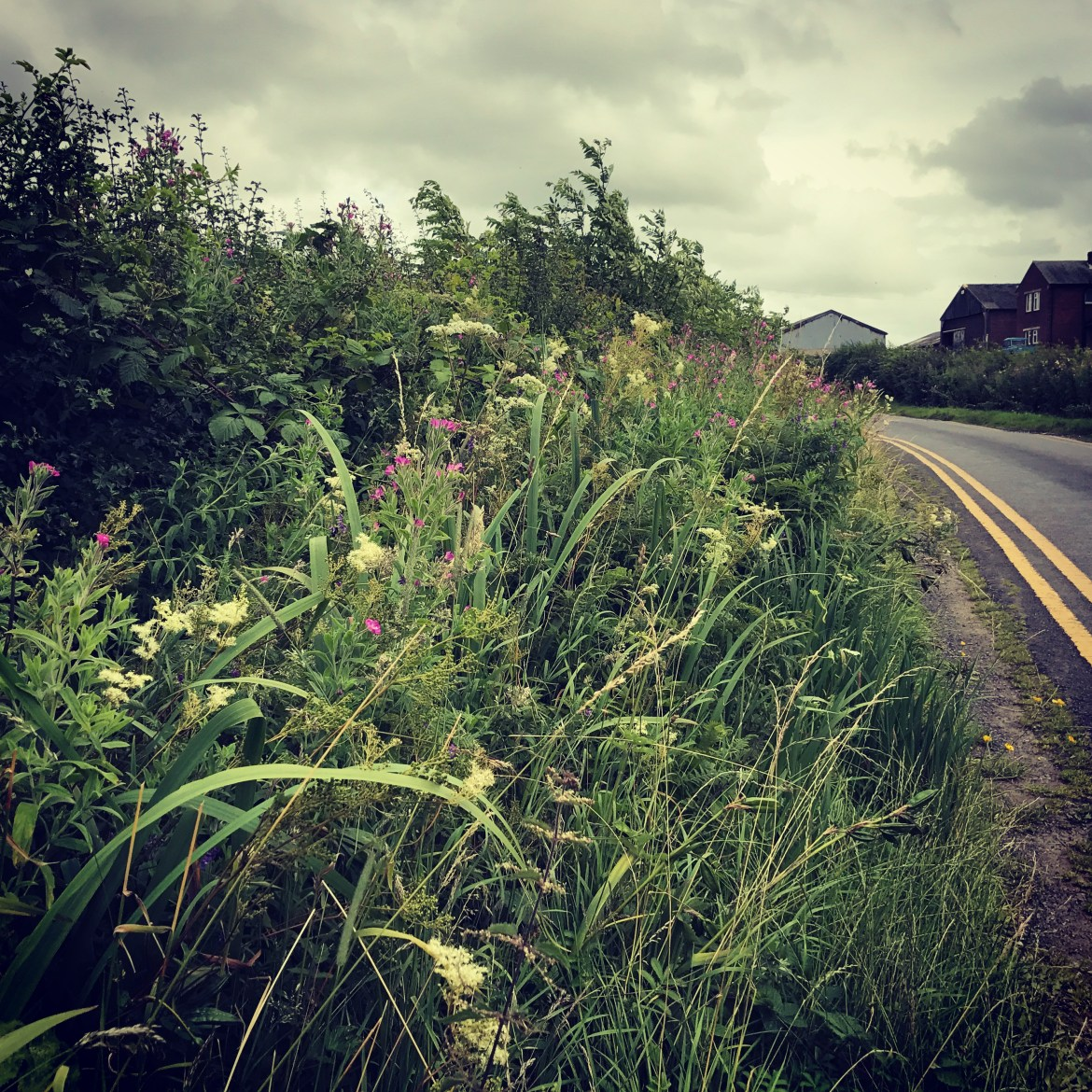 Wild flowers on road verges