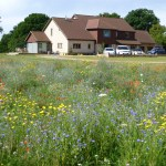Using Wild Flowers In Gardens Wild Flower Lawns And Meadows