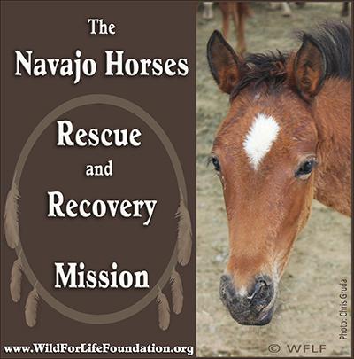 Navajo Horse Mission