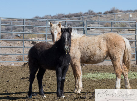 Many Adorable Weanlings are Available