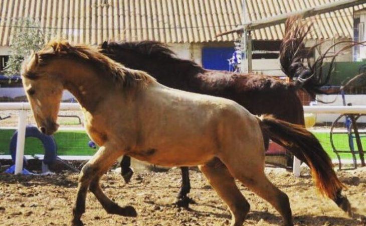 ריפוי קוונטי דרך אנרגיית הסוסים