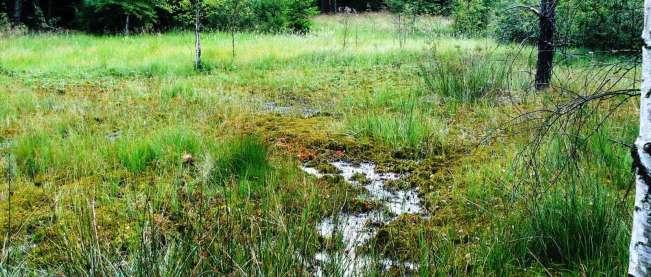Moor im Ehewald©Fromader-Heubeck