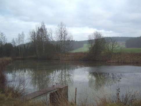 Amphibienweiher bei Amberg © Wildland-Stiftung Bayern