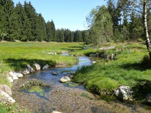 Reanturierung am Osterbach©Naturpark Bayerischer Wald_A-Hofmann