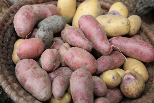 Bunte Kartoffeln©K.Hartisch