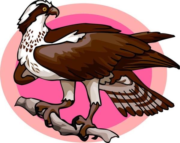 Free Osprey Clipart