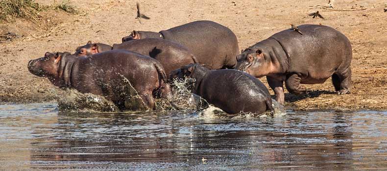 Wildlife Picture Galleries Showcasing Africa S Spectacular