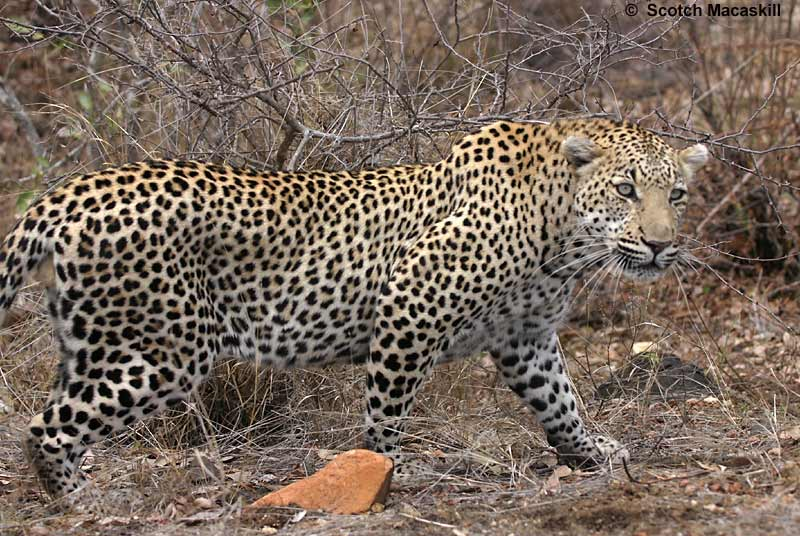 African Cats Online Free